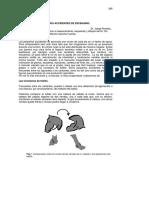 Accidentes En El Escenario escrito por Dr. Josep Rumbaud