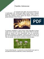 Familia Asteraceae
