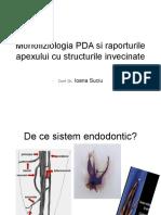 Morfofiziologia parodontiului apical
