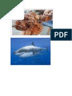 Ribe Jadrana