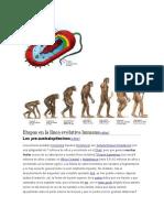 Etapas en La Línea Evolutiva Humana