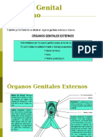 Anatomia Del Aparato Genital Fem