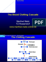 Blood-Clotting-Cascade