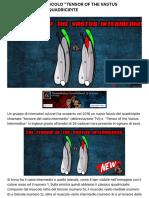 "Ecco il nuovo muscolo ""Tensor of the Vastus Intermedius"" nel quadricipite | Ticinosthetics Blog"