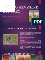 CONEJO SILVESTRE EUROPEO.pptx
