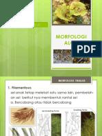 MORFOLOGI-ALGA-2.pdf