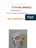 VITUAL SCIENCE FAIR ANATOMY MODELS LAB-01