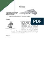 Huesos ANATOMIA.docx