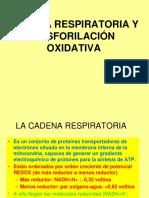 Cadena Respiratoria y Fosforilación Oxidativa 2012