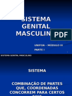 Sistema Genital Masculino - i