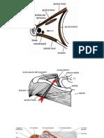 Anatomia axila.pptx