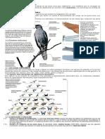 Criterios y categorías taxonómicas.docx