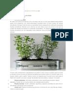 10 tipos de hierbas para cultivar en maceta.docx