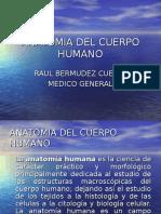 Anatomia Del Cuerpo Humano