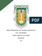 Taller Elaboración de Modelos Anatómicos