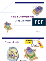 Cell-Organelles-Outline.pdf