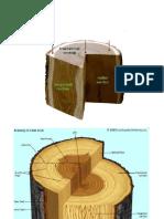 sectiunile lemnului