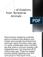 The Origin of Dolphins from Terrestrial Animals