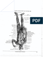 Apunte Anatomía Parte 1 (Isabel Etcheverry)