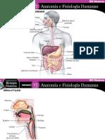 anatomia e fisiologia humana digestão
