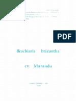 Brachiaria-brizantha (1).pdf