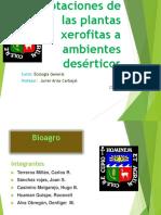 Bioagro.Adaptaciones de las xerofitas..pdf