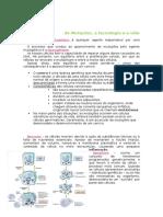 Mutações e Oncogénese