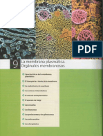 Tema 9 La Membrana Plasmática