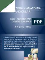 Anatomia y Morfologia Radicular 2016 Final2