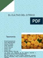 Clase 3 El Cultivo de Citricos