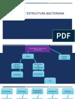 Morfología y Estructura Bacteriana