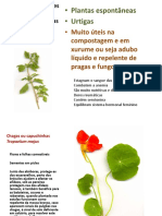 Plantas Medicinais Aromaticas e Condimentares