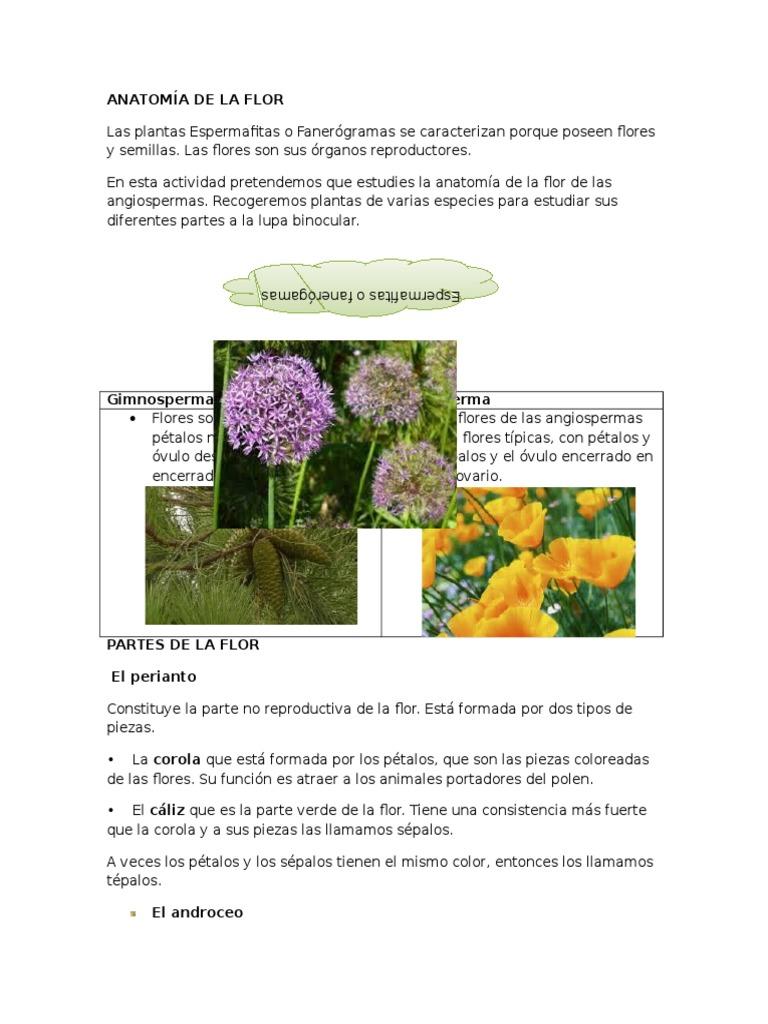Atractivo La Actividad De La Anatomía De La Flor Elaboración ...