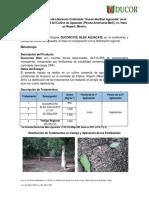 Efecto de Ducorcote Blen en Aguacate en Nayarit