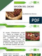 Descripción Del Cacao