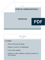Anatomy of Cardiovascular 1