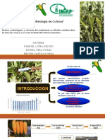 caracteres ecofisiologicos en maiz