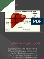 Glucagon y Adrenalina