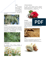 Plantas Medicinales Faciles de Conseguir