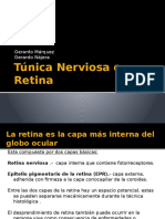 Túnica Nerviosa o Retina 11