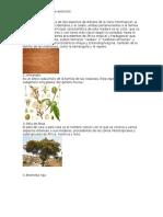 5 Plantas de Peligro de Extinción