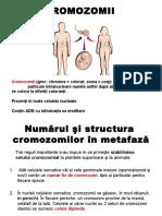 3. Cromozomii