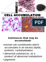 Cell Accumulation.part2