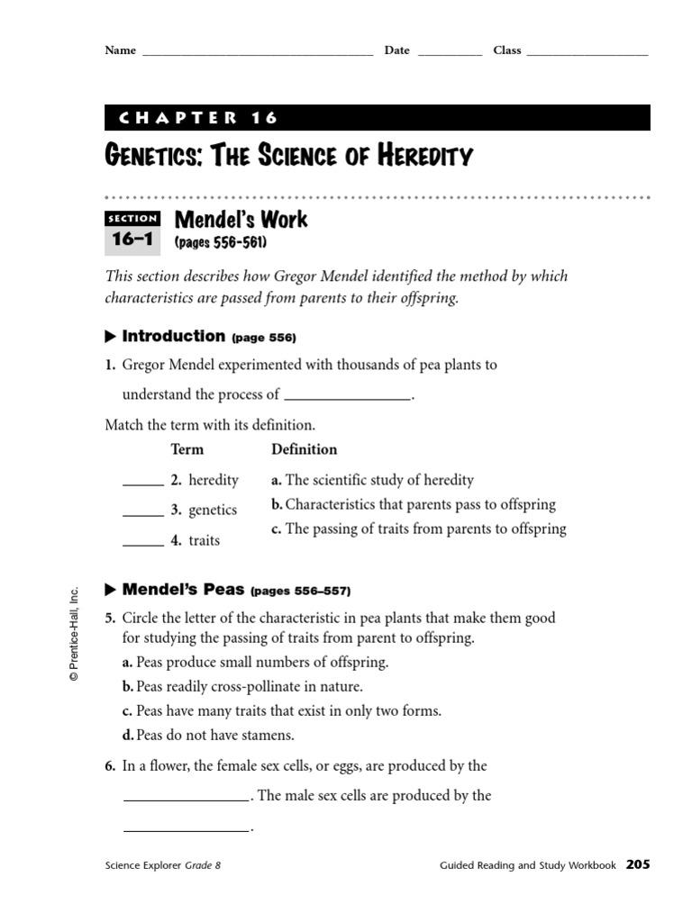 Chapter 16 Guided Notes Dominance Genetics – Gregor Mendel Worksheet