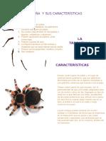 La Araña y Sus Características
