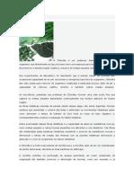 Chlorella Desintoxicante