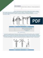 Metodo Rula Manual