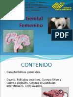 Sistema Genital Femenino 1 y 2