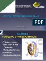 Sistema Genital Masculino 2