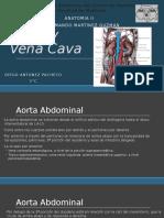 Aorta, Vena Cava y Circulacion Mesenterica